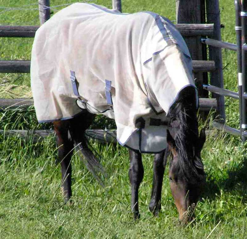 A horse wearing a fly sheet that keeps away insects. Note also a neck cover